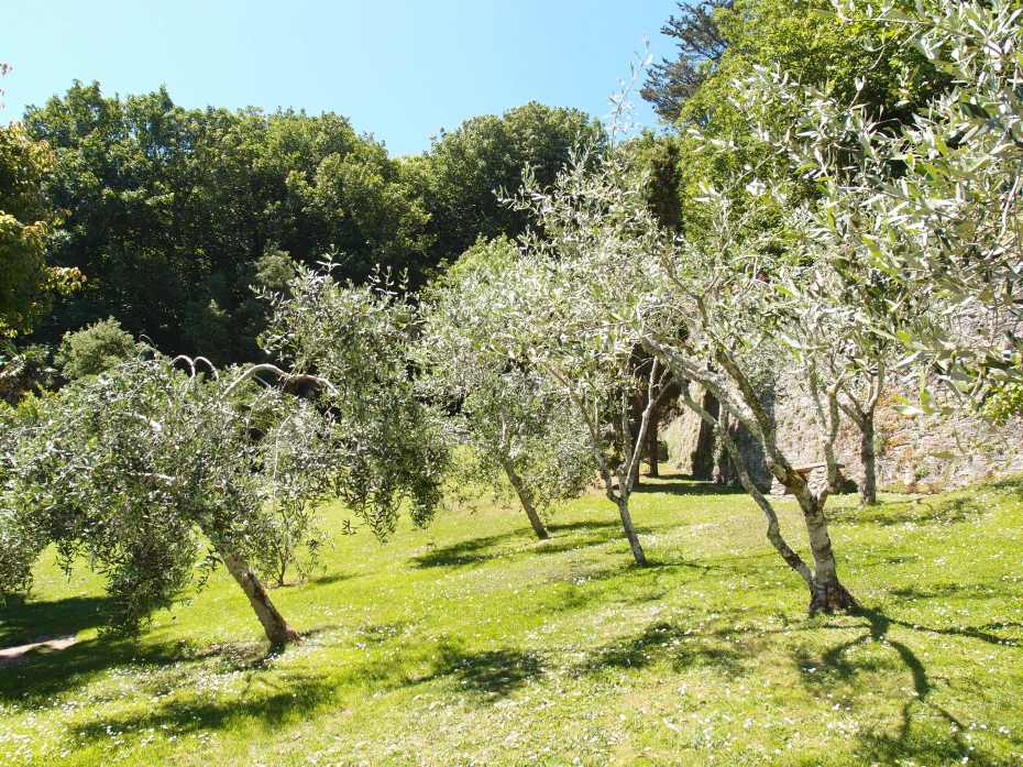 The Olive Grove is planted at the highest point in the Gardens.