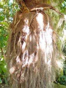 A Palm trunk