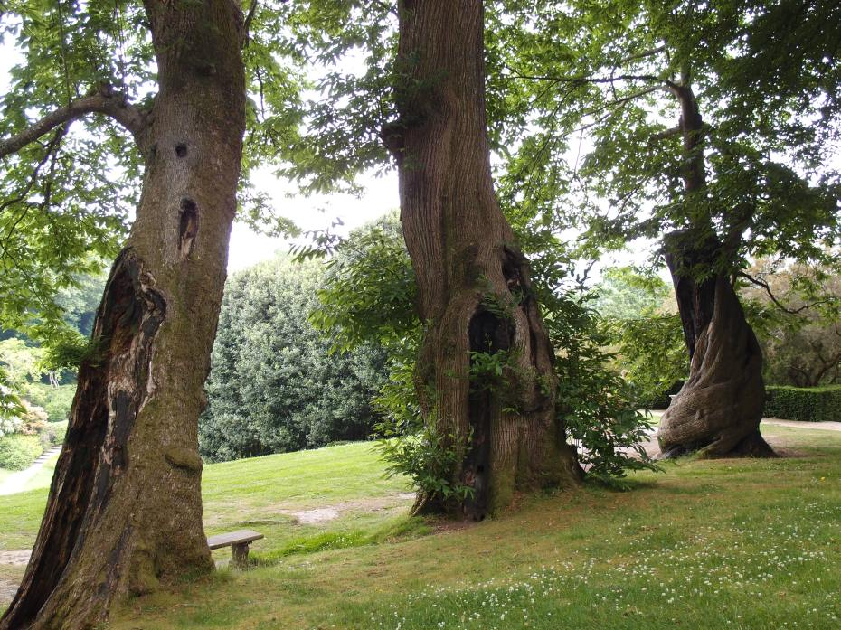 A spectacular cluster of 500-year-old Spanish Chestnut Trees towers over the western edge of the Tiltyard. The Chestnuts are Dartington's most precious specimens, and were planted by the first of the Champernownes, when that family acquired the property.