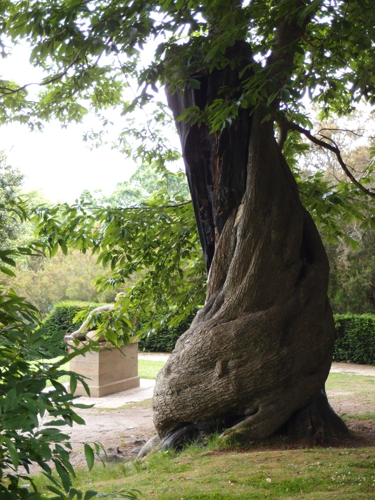 Spanish Chestnut Tree, with Henry Moore statue, in background.