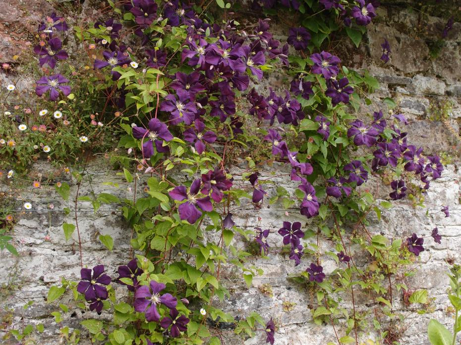 Flowers cascade over the Sunny Border's Wall