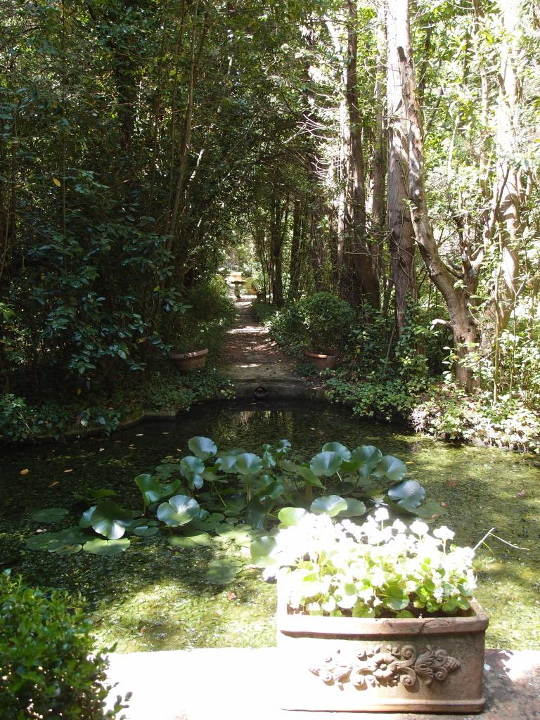A woodland path leads to another pool